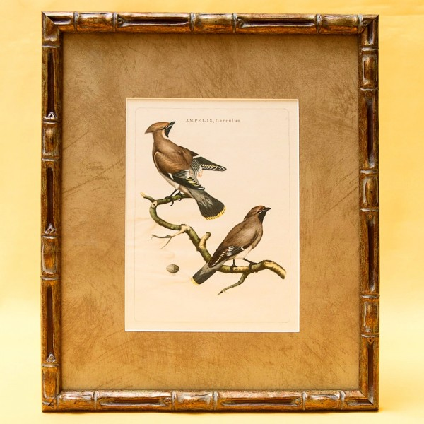 Картина - Литография «Свиристели» из серии «Птицы Голландии». Nederlandce Vogelen, Голландия.