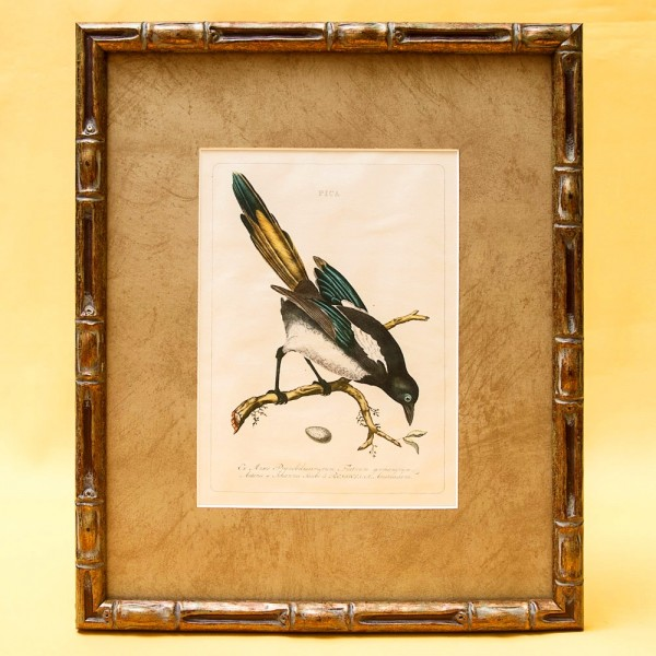 Картина - Литография «Сорока» из серии «Птицы Голландии». Nederlandce Vogelen, Голландия.