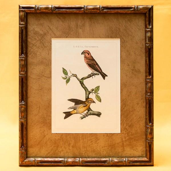Картина - Литография «Клест» из серии «Птицы Голландии». Nederlandce Vogelen, Голландия.