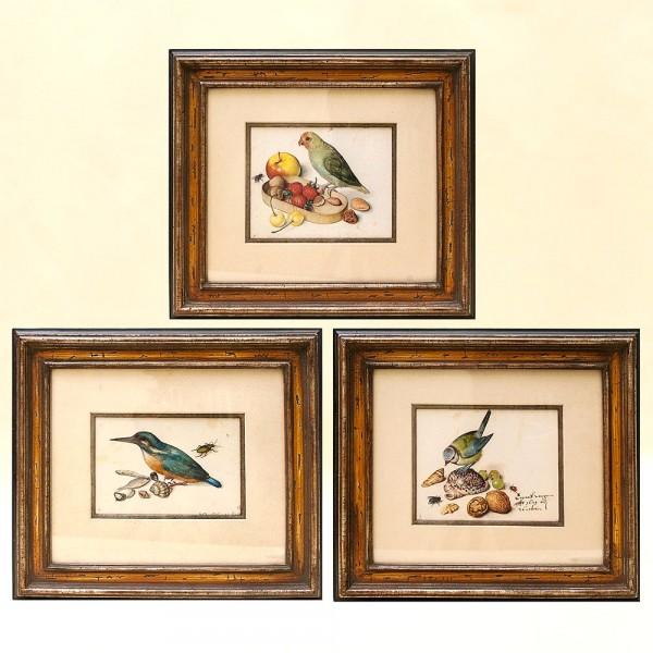 Ансабль из Трёх Цветных Гравюр - Картин «Натюрморт с Птицами» на картоне. Германия.