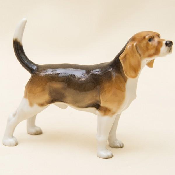 Редкость!!! Фарфоровая Статуэтка Собака, «БИГЛЬ», Hutschenreuther,  Германия -1955 год.