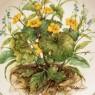 Коллекционная Тарелка «Цветы - Калужница» Фарфор, Lilien Porzallan, Австрия -1992 год.