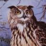 РЕДКОСТЬ! Полная Коллекция Тарелок «Животные наших гор и лесов» Фарфор Швейцария -1995 год.